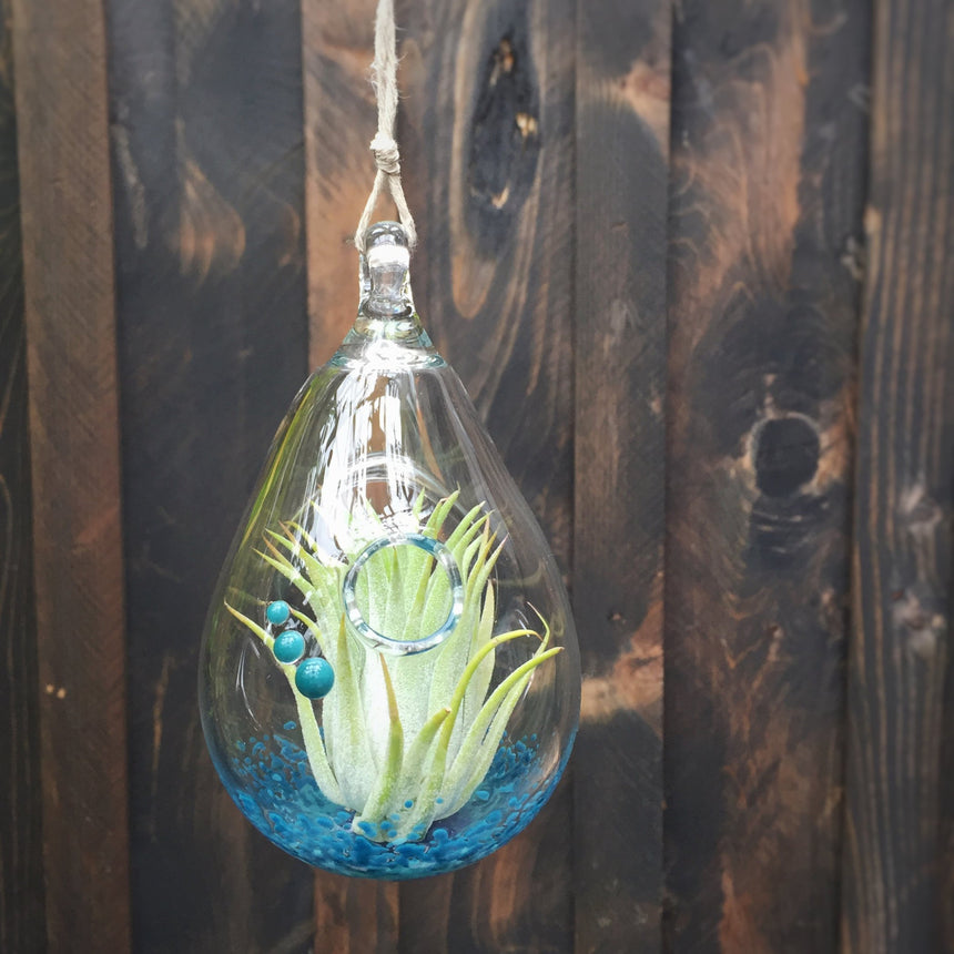 Air Plant Terrarium + Teal Appeal