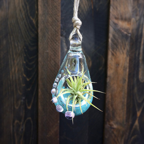 Air Plant Terrarium Pendant Fancy + Teal Purple