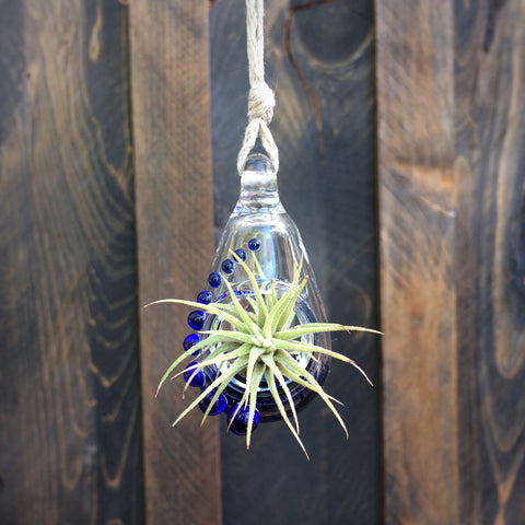 Air Plant Terrarium Pendant Fancy + Cobalt