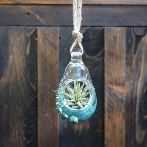 Air Plant Terrarium Pendant Fancy + Teal Glitter