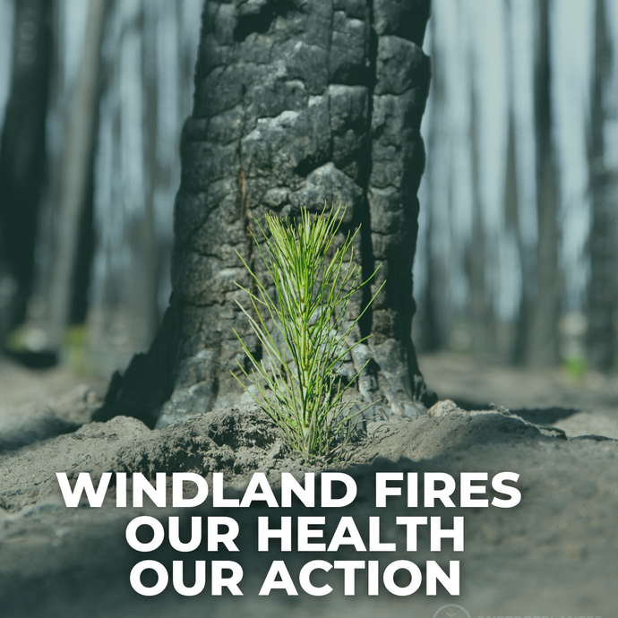 Wildland Fires: Causes, Health Concerns and How We Take Action
