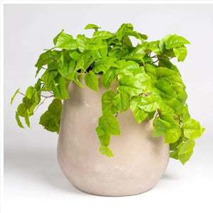 Philodendron In Urbano Bell Planter By Gold Leaf Design Group