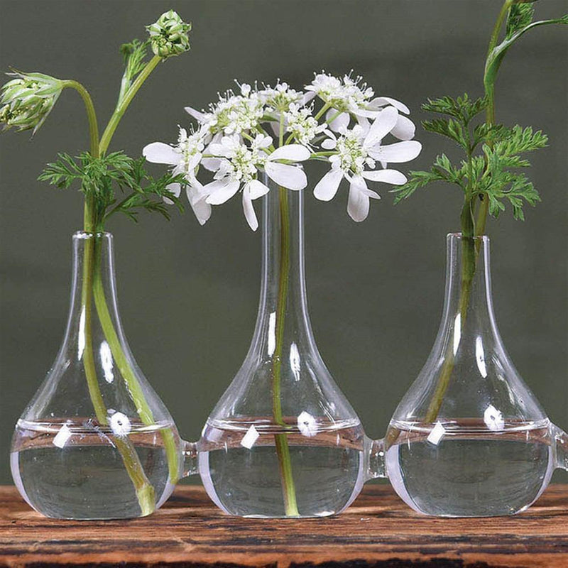HomArt Quintet Glass Vase - Set of 4 - Feature Image