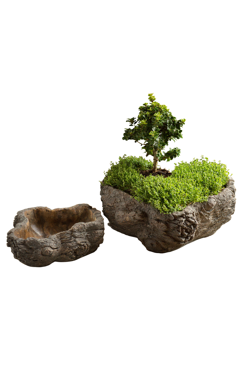 Vagabond Vintage Cement  Planter,Burled Bark - Set of 2