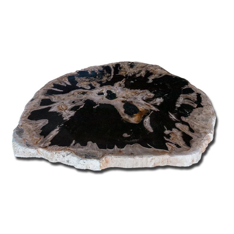 Petrified Wood Slab With Custom Made Base PF-1117  by Aire Furniture