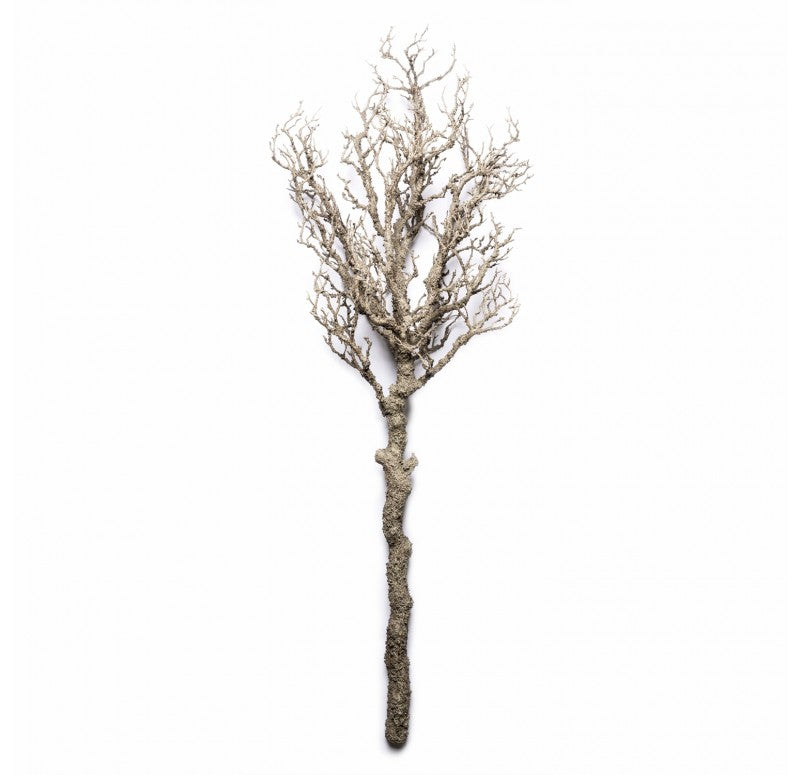 "Bonsai Topiary, 55""L by Gold Leaf Design Group"
