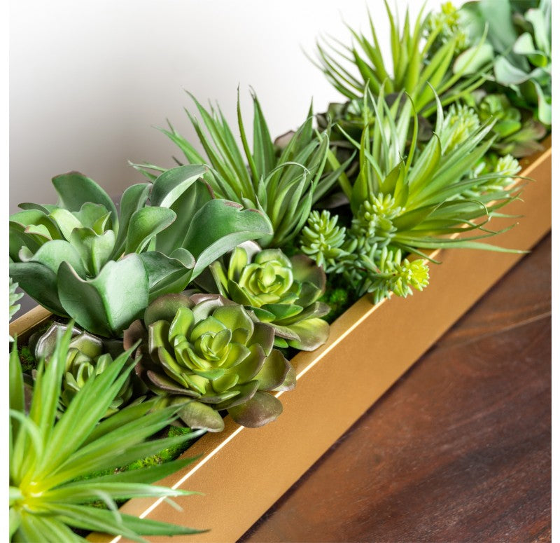 Desert Echeveria in Linear Planter by Gold Leaf Design Group