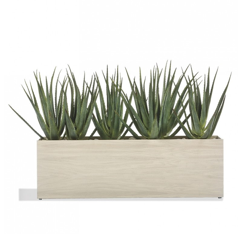 Aloe in Linear Planter, Whitewash by Gold Leaf Design Group