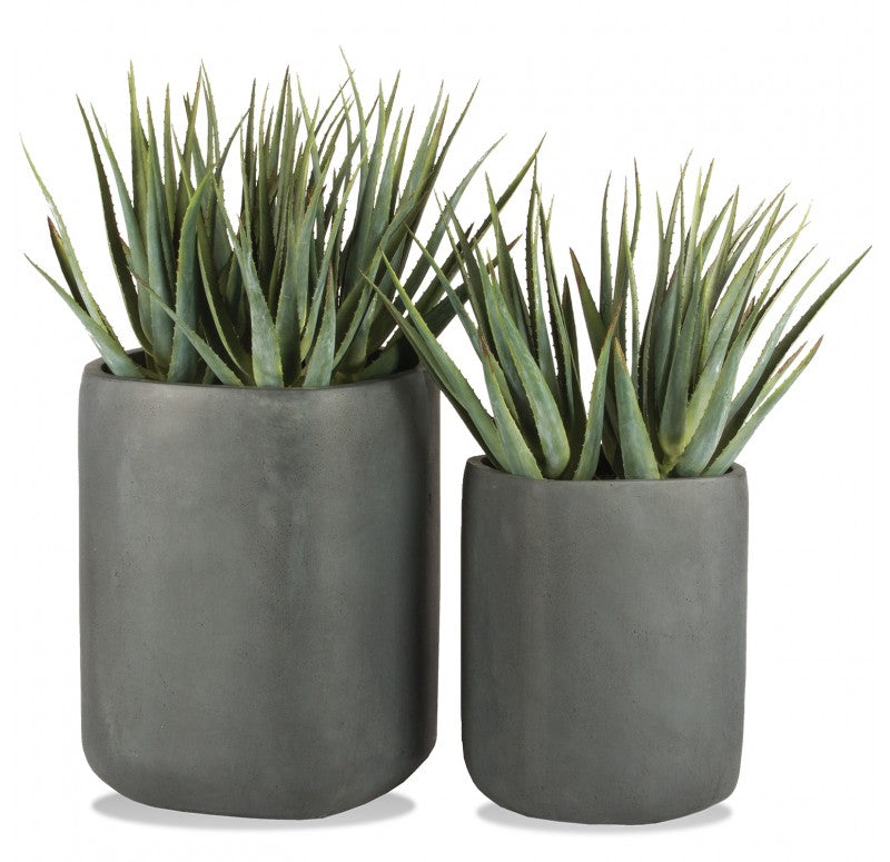 Aloe in Tombo Planter, Set of 2 by Gold Leaf Design Group