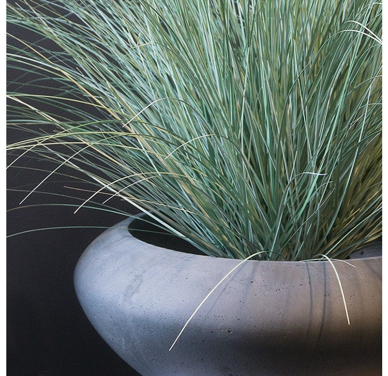 Grass: Potted Bear Grass in Sahara Bowl by Gold Leaf Design Group