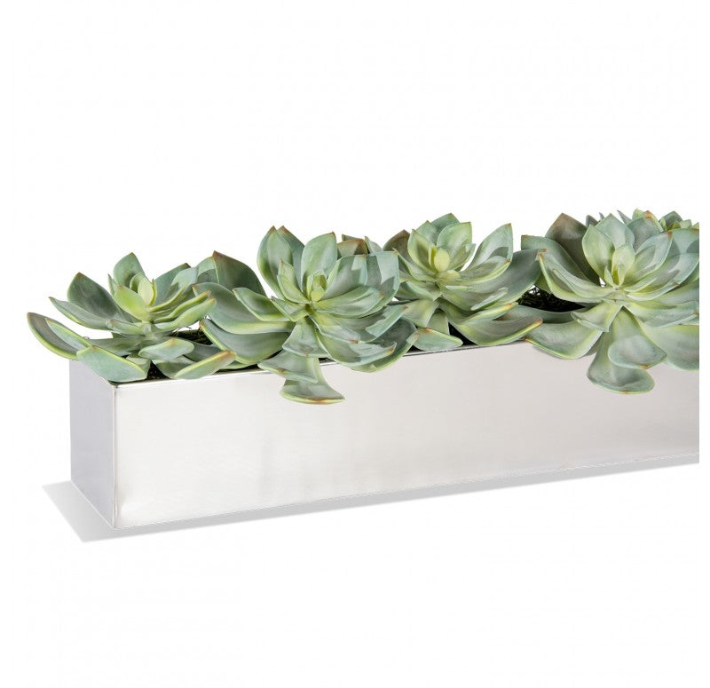 Stainless Steel Table Planter, Ghost Grapto by Gold Leaf Design Group