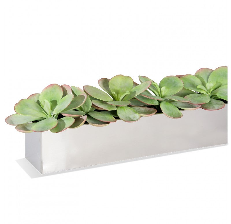 Stainless Steel Table Planter, Paddle Kalanchoe by Gold Leaf Design Group