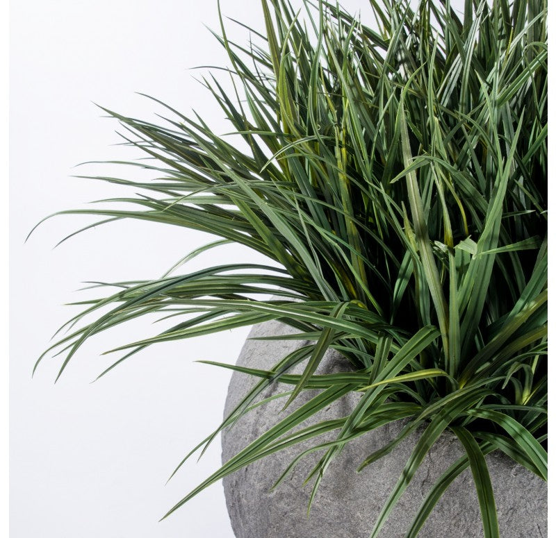 Grass: Liriope in Piedra Planter, LG by Gold Leaf Design Group