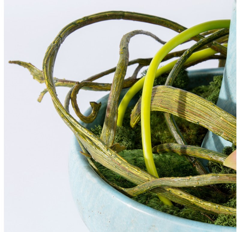Anthurium in Tori Bowl by Gold Leaf Design Group