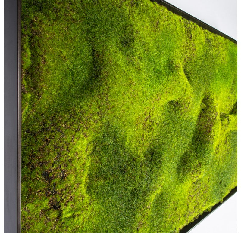 Green Wall, 'New Moss' by Gold Leaf Design Group