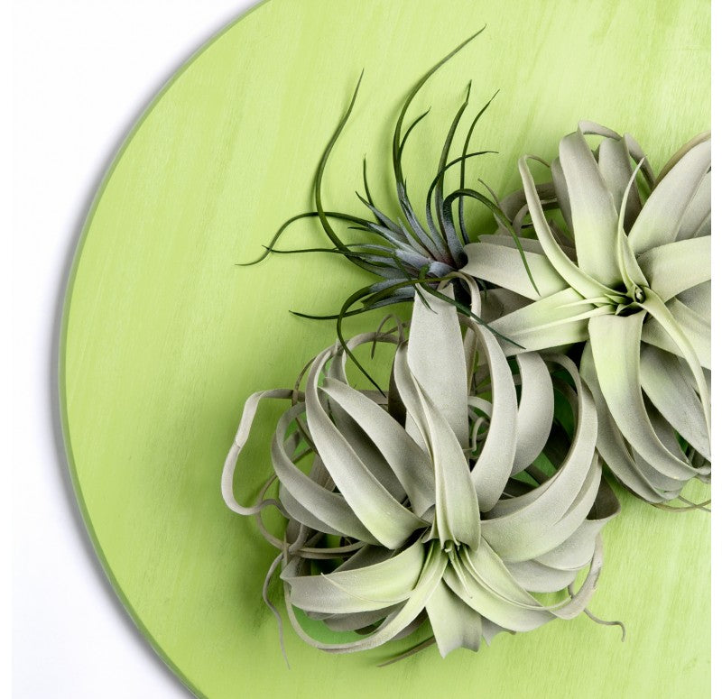 Green Wall Substrate, Urban Air Plants by Gold Leaf Design Group
