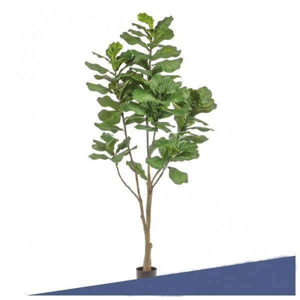 "Potted, Fiddle Leaf Tree, 84""H by Gold Leaf Design Group"