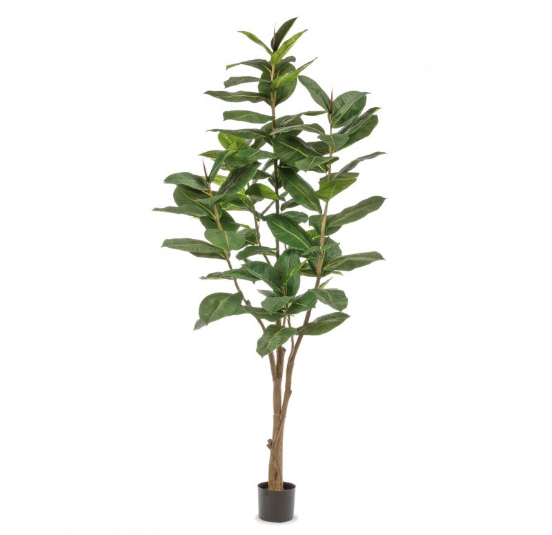 "Potted, Rubber Ficus Tree, 84""H by Gold Leaf Design Group"