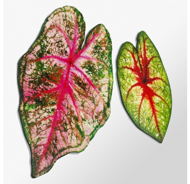 "Mosaic Caladium Green Wall Art, 24""H by Gold Leaf Design Group"