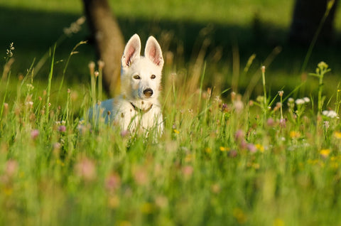 Dog enjoying nature in tall grass