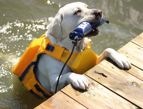 dog in water with toy