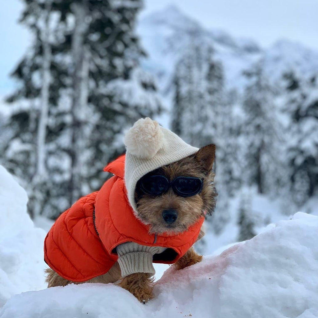 lil-roo-sports-an-orange-puffer-coat-by-doggie-design