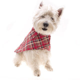 Doggie Looking Very Dapper in a Red Tartan Raincoat by Hamish McBeth