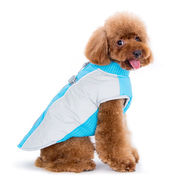 Dog Modelling the Mountain Hiker Coat by DOGOⓇ Pet Fashions