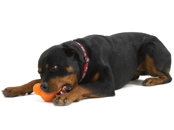 Rottweiler enjoying his tangerine Tux® Treat Toy by West Paw Design