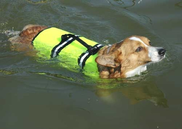 Dog swimming in yellow Life Jacket for Dogs by Paws Aboard