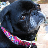 Dog wearing Ziggy Dog Collar and Leash Set by Diva-Dog