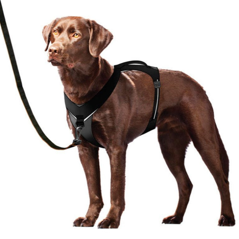 Dog Ready for Adventure Wearing a Go-Tech Adventure Harness by Kurgo