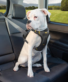 seat-belt-position-safe-dog-car-harness