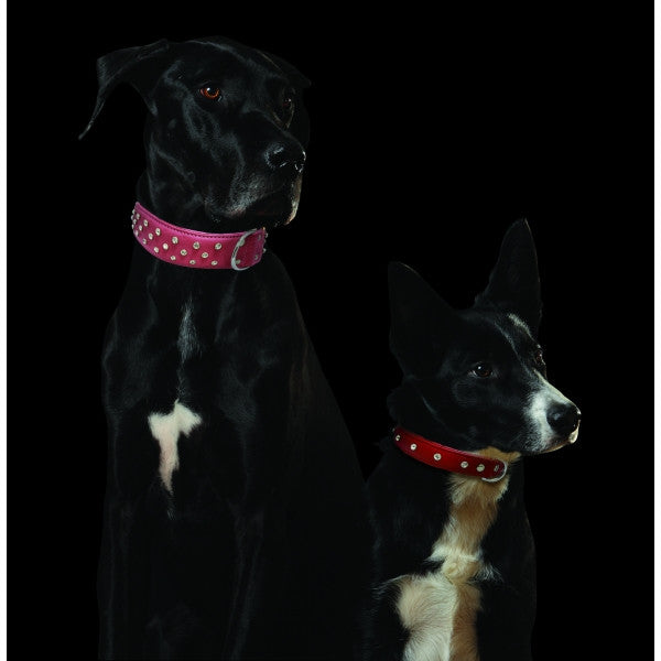 Dogs wearing Leather Rhinestone Bling Dog Collars by Angel Pet Supplies