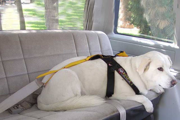 Dog lying down wearing the Roadie Canine Vehicle Safety Harness by Ruff Rider - UKUSCAdoggie
