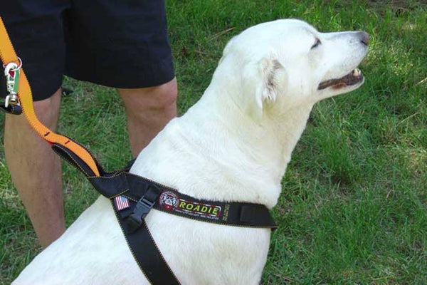 Dog out of car wearing the Roadie Canine Vehicle Safety Harness by Ruff Rider - UKUSCAdoggie