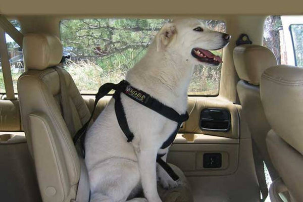 Roadie Canine Vehicle Safety Harness by Ruff Rider - UKUSCAdoggie
