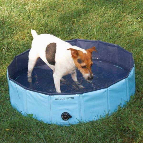 Dog in Splash About Heavy Duty Dog Pool by Guardian Gear