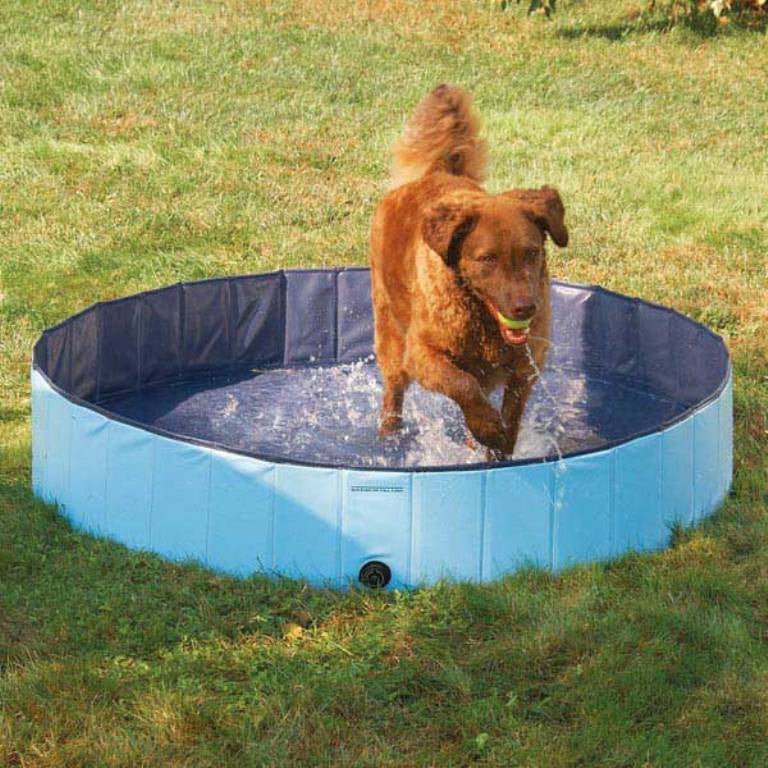Doggie splashing around in Splash About Heavy Duty Dog Pool by Guardian Gear