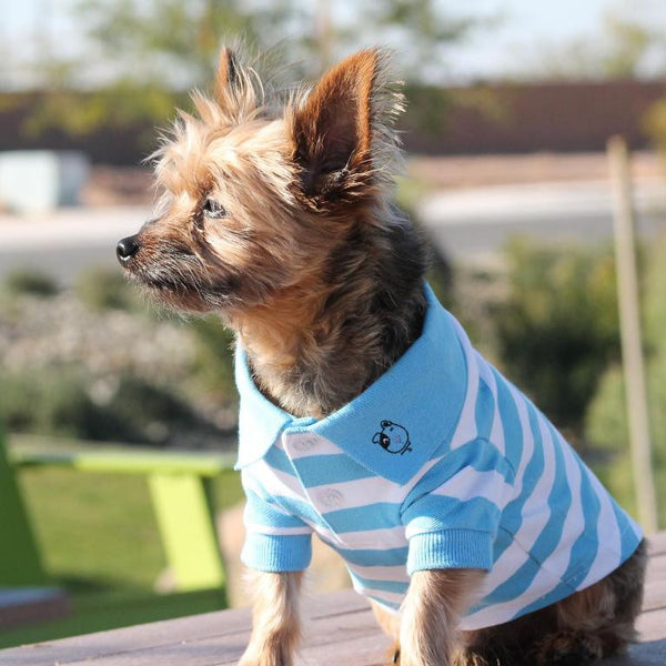 Yorkie Wearing the Niagara Blue and White Striped Polo Shirt