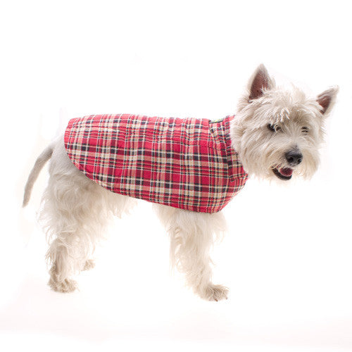 West Highland Terrier Sporting the Red Tartan Dog Raincoat by Hamish McBeth