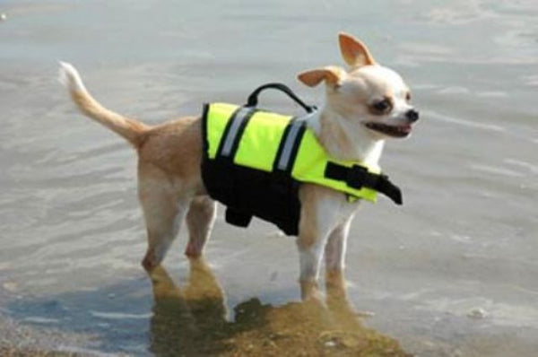 Small breed dog wearing the yellow Life Jacket for Dogs by Paws Aboard