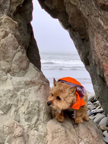 a-raincoat-that-is-perfect-for-all-canine-adventures-in-the-rain