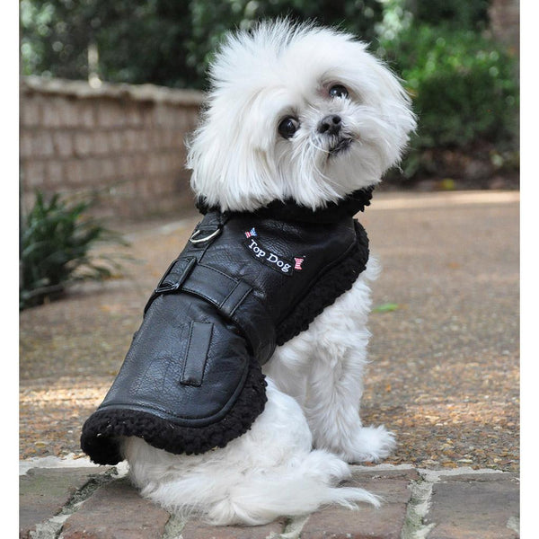 cute-dog-models-top-dog-flight-harness-coat