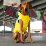 dog-looking-dapper-in-torrential-tracker-yellow