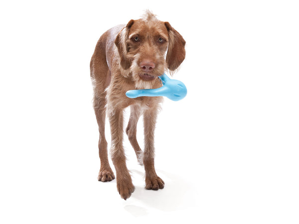 tizzi-is-the-perfect-toy-for-gentle-chewers-or-senior-dogs
