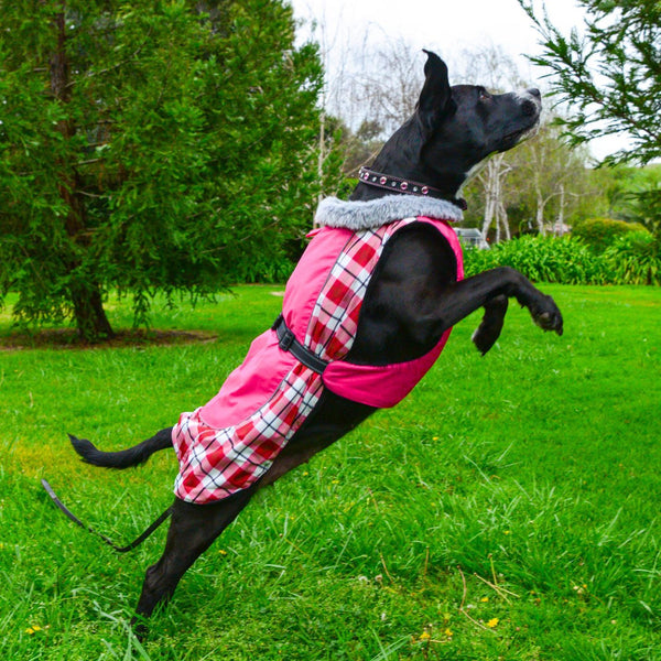 dog-shows-off-alpine-all-weather-dog-coat-raspberry-plaid