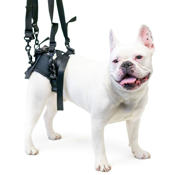 dog-supported-by-walkin-lift-rear-dog-harness