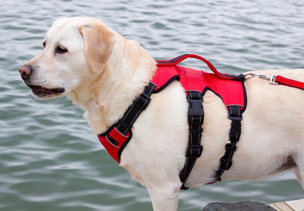 galveston-bay-harness-side-view-red