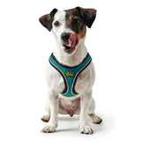 dog-wears-hilo-comfort-dog-harness-turquoise